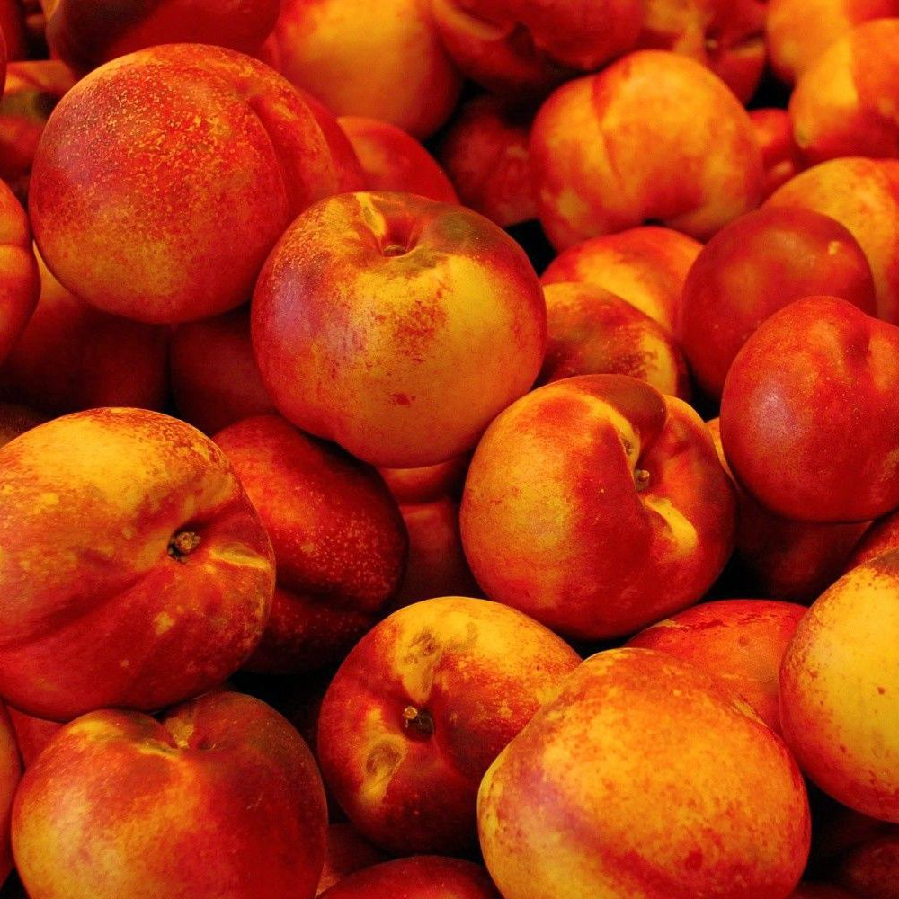 Nectarines-Frouits